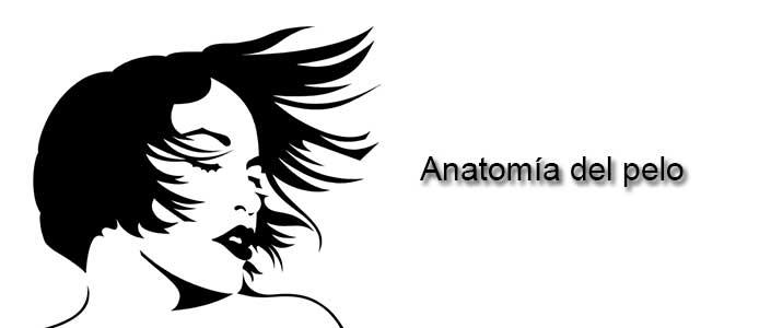 Anatomía del pelo